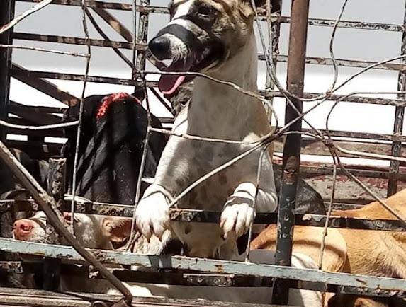 Matança de cães: OAB pede cassação do registro de veterinário e denuncia ex-secretário de Igaracy