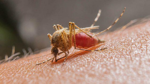 Mais um caso de malária é registrado no Conde; quarta vítima está no HULW