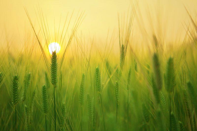 A colheita da alma