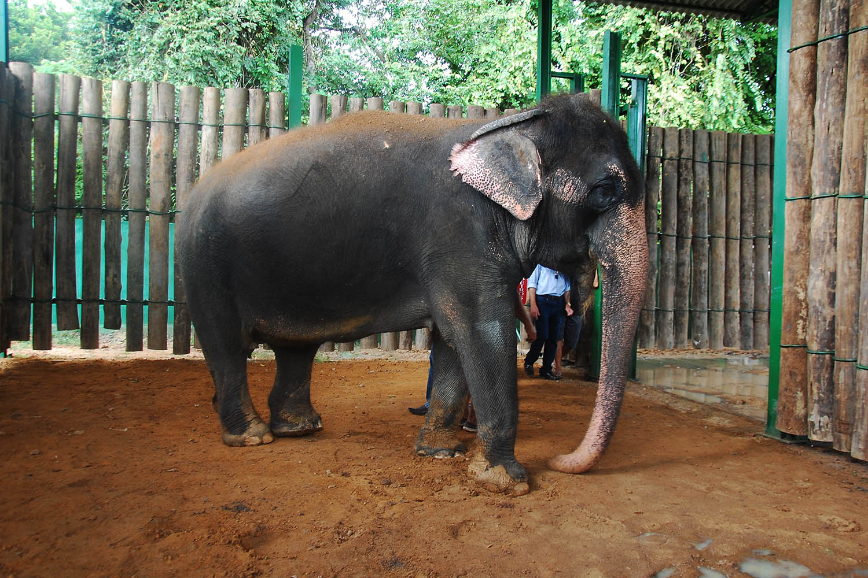 Laudo aponta que elefanta Lady está doente e corre risco de morte na Bica de João Pessoa