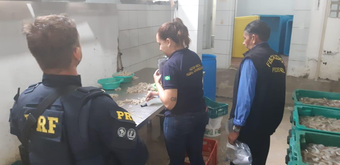 PRF apreende 4, 5 toneladas de camarões produzidos em loja de fachada de bronzeamento artificial