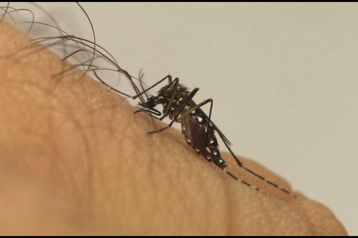 Incidência da dengue no país aumenta 600% em um ano